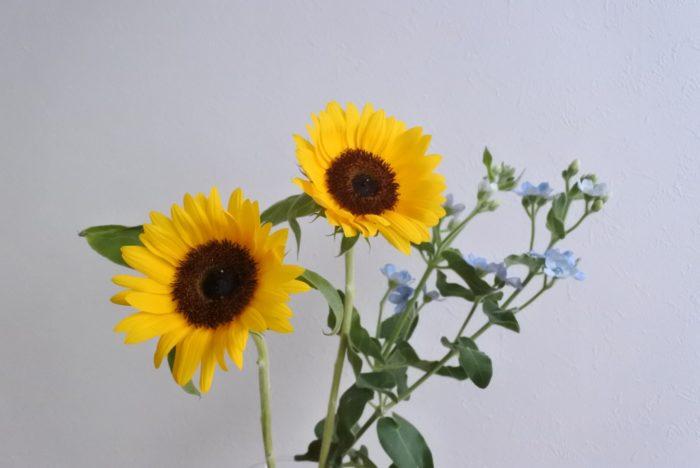 ヒマワリ2本、ブルースター2本(花の付き方により1~3本程度で調整しましょう)