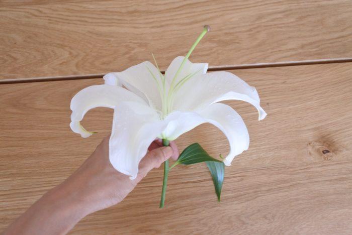 花ごとにカットすればれば小さめの花瓶や口が細い瓶にも生けられますね。花瓶の水に茎が2~3センチ程度浸かるように生けましょう。オアシスに挿してアレンジメントに使うこともできますよ。