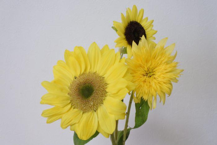 レモンイエローの花弁や、黄緑の芯をもつ柔らかいイメージのヒマワリは、オレンジや明るい色の花と組み合わせても、水色や白と組み合わせてもまとまります。合わせる花材によってイメージが変わるので、幅の広いアレンジが楽しめますね。