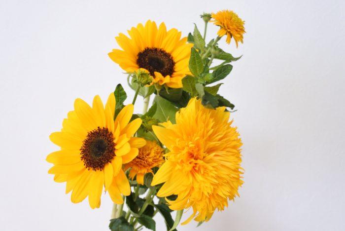 明るいオレンジの花弁や、芯が黒くはっきりとしたヒマワリらしいヒマワリは、そのイメージを活かして夏らしい花と組み合わせるのがおすすめです。