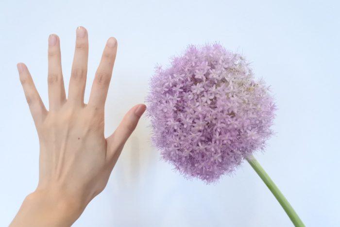 手のひらサイズもある大きなギガンジウムですが、実は小さな花瓶にも生けられるんです。長く生けるのを楽しんだ後や、大きい花瓶がない時の参考にしてみて下さいね。
