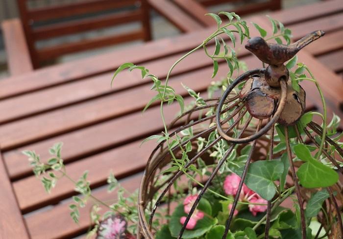 今回の寄せ植えのテーマは「お庭をおしゃれに演出する寄せ植え」です。  鳥かごという限られたスペースに数種の草花を植えて、お庭のフォーカルポイントになる寄せ植えを作りましょう。