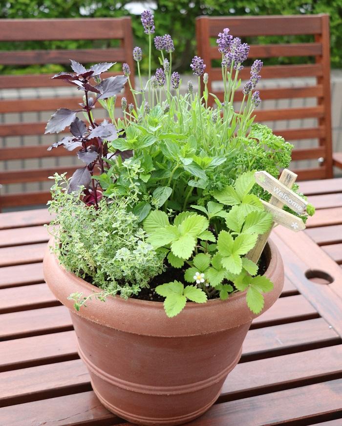 今日では、「ハーブ」という言葉は、「暮らしに役立つ香りのある植物」を総称する言葉として使われています。  私たちはハーブたちを見て、香って、触って、食することで、心と体を思い切りリフレッシュすることができます。  ハーブ類は見た目がそれほど華やかではありませんが、一年中どんな時もそばにいてほしい植物だと思います。  そんなハーブを数種類集めて寄せ植えを作っておくと、水やりの際に日々清々しい香りを感じ、使いたい時には摘み取ってすぐに楽しめます。  ぜひ、ハーブの寄せ植えを作ってハーブと暮らす日々をお楽しみください。