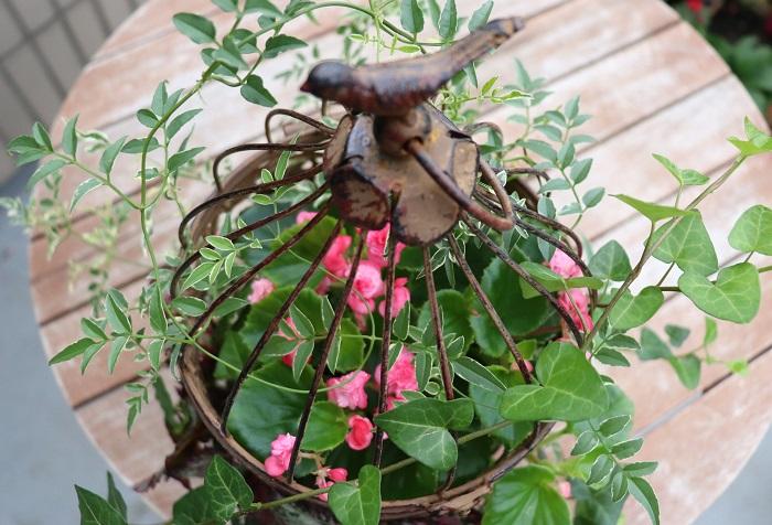 これは、完成から1週間後の様子です。鳥かごの外側に出した茎葉が伸びやかに育っていますね。