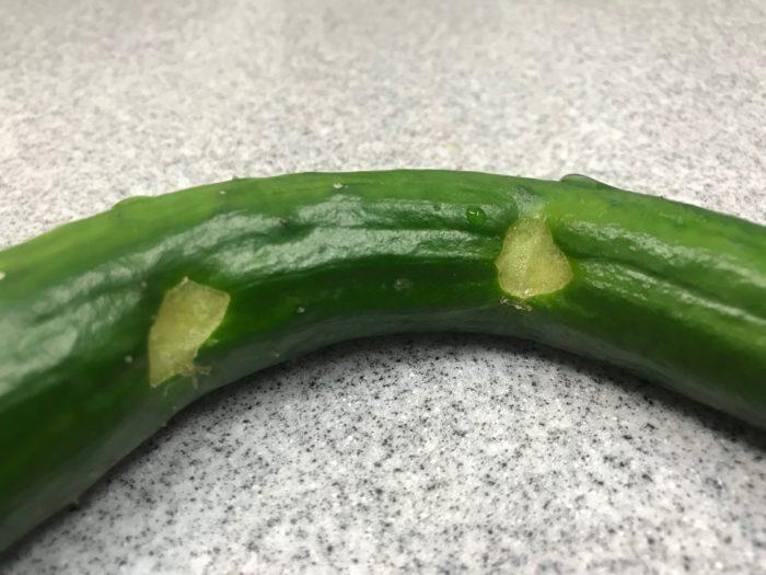 野菜は全般的に多くの種類がナメクジの食害を受けます。キャベツやレタス、白菜などの野菜は葉の中央部まで侵入して食害したり、イチゴやキュウリなども丸い穴を開けて食害します。  この写真はナメクジがキュウリを食害した跡です。