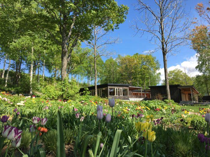 色とりどりのチューリップが咲き乱れる風景は、純粋に春の感動を覚えます。約1万球の春風にそよぐチューリップは本当に見事です。