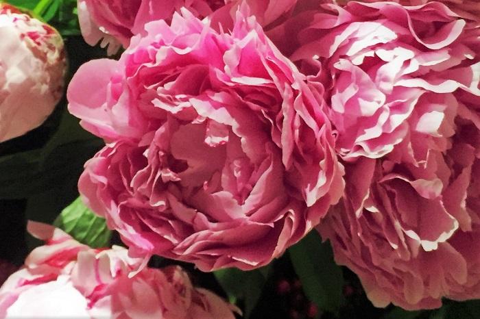 一年を通して香りの良いお花はたくさんあります。特に夏は香りの強いお花が多くなる季節です。甘く濃厚で印象的な香りの夏のお花を身に纏ってみませんか。お気に入りの香りのお花を見つけて、香りでお花を選んでみるのも楽しみのひとつになるかもしれませんよ。