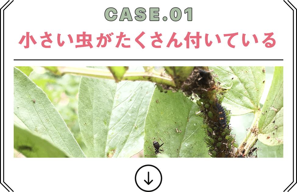 CASE.01 小さい虫がたくさん付いている