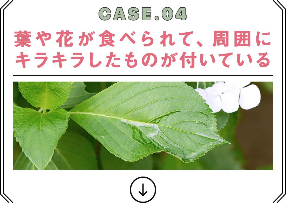 CASE.04 葉や花が食べられて、周囲にキラキラしたものが付いている