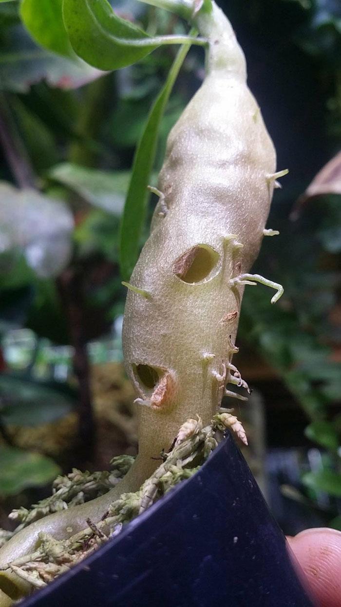 アリ玉によって生長の仕方や形状も違って、穴は1個から増えていきます。