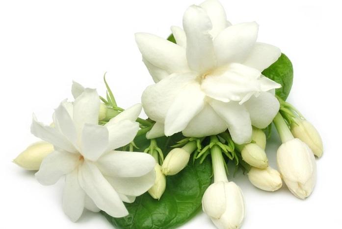 ジャスミンの花の香り