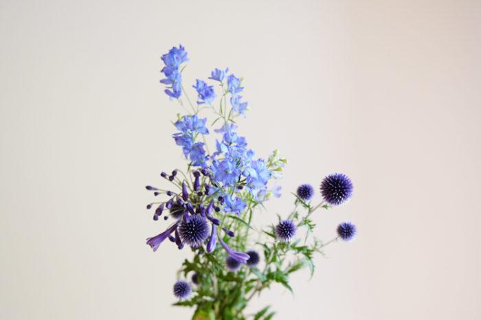 回は、前田さんのご自宅で撮影。前田さんがこの時期には欠かせない青い花の魅力を教えてもらいました。  -様々な色合いの「青色」-  青色の花といっても様々な色合いがあるのがとっても素敵。瑠璃色からはっきりと鮮やかな濃いブルー、パープル寄りの色があり、合わせたときの青のグラデーションがすごくきれいで見惚れてしまいます。  -涼やかな花-  青い花は見ただけで体感温度を下げてくれるようで、部屋にあるだけで涼しくなった感覚になってしまいます。私の家は暑くなりやすい環境だったので、この時期が来ると必ずと言っていいほど青い花を飾って夏の思い出を作っています。