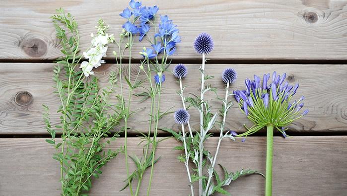 今回、前田さんが用意してくれた青い花はこちら。  左から、ガレキフォリア・デルフィニウム・ルリタマアザミ・アガパンサス  デルフィニウムもアガパンサスも順番に花が咲き、長く楽しめるのでおすすめです。ルリタマアザミはドライフラワーにもできる花なのでお好みに合わせてドライフラワーとしての魅力に触れてみるのもいいですね!