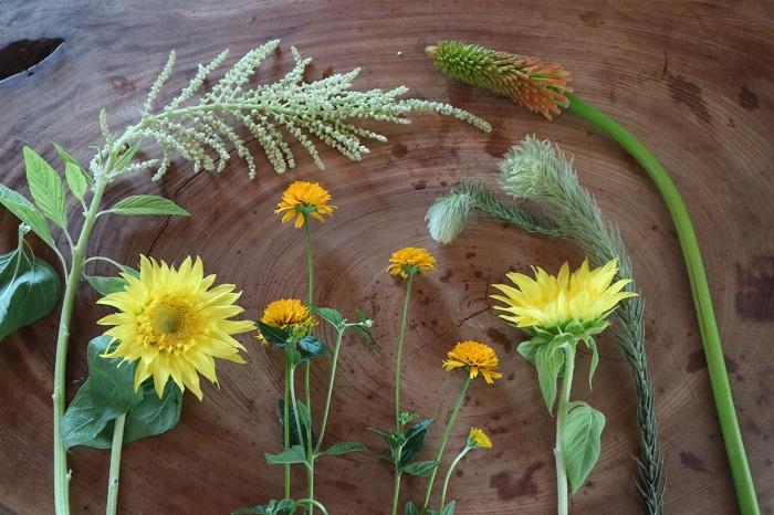 左から、ケイトウ・モネのヒマワリ・旭・フィリカ・トリトマ。  黄色系とホワイト系で明るさとさわやかさをイメージした花材でまとめました。