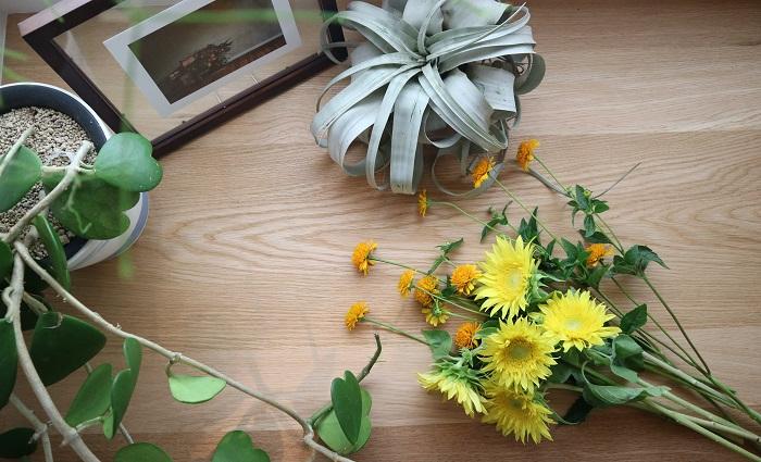 夏の定番の花と言えば「ヒマワリ」。  暑い夏にバテそうになってもヒマワリをみると元気になったことありませんか?そんなヒマワリの魅力や楽しみ方を前田さんに教えてもらいました。