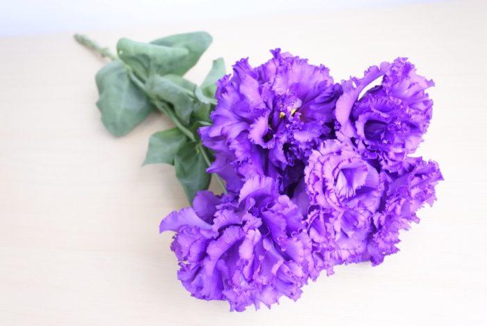 フリンジ咲き  写真は大輪でフリルが多く華やかな人気のボヤージュシリーズシリーズです。こちらは青紫のボヤージュブルーと言う名前の花ですが、色の種類が豊富で、他にも緑、黄色、白、ピンク、アプリコットカラーなどがあります。  トルコキキョウは他にも小ぶりの花の小夏シリーズや、バラのような咲き方のもの、アンティークカラーから黒に近い色まで、形も色も様々な種類があります。
