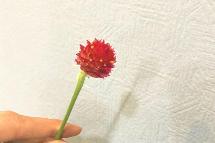 花の周りの葉を取り除くとこのようになります。