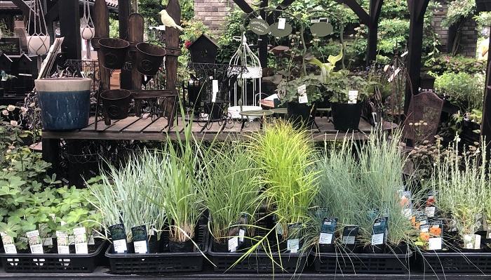 グラス類も豊富に揃っています。グラス類は特に、苗の状態からだと成長したときの姿が想像しにくいので、ガーデンの植物を見ながらグラスの苗を選ぶと良さそうです。