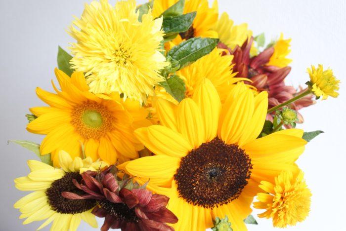 学名…Helianthus annuus  別名…サンフラワー  科、属名…キク科、ヒマワリ属  分類…草花/一年草  原産地…北アメリカ  開花期…7月~9月頃  花色…黄、オレンジ、赤、白など  花言葉…「憧れ」「あなただけを見つめる」  学名のHelianthusはギリシャ語の「helios=太陽」と「anthos=花」が合わさった名前です。日本名の「向日葵」、英名の「sun flower」、フランス名の「soleil」など、どれも「太陽(日)」がもとになっていますね。他の多くの言語でも太陽をもとにした名前がつけられており、世界中でヒマワリは「太陽の花」と例えられていることがわかります。  6月頃からお花屋さんにヒマワリが並び始めると、もうすぐ夏がくるなぁと思いますよね。明るく存在感があるヒマワリは老若男女から人気があります。季節感があるので夏場の贈り物にもおすすめですよ。