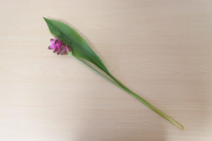 クルクマはどこをカットしても大丈夫です。花瓶の長さに合わせてカットしましょう。花と葉を分けてもいいですよ。2~3センチの浅めの水に生けましょう。
