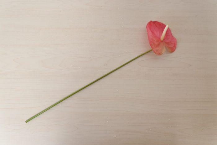アンスリウムはどこをカットしても大丈夫です。花瓶に合わせてカットしましょう。まっすぐ~やや斜めにカットして、3~5センチの浅めの水に生けましょう。