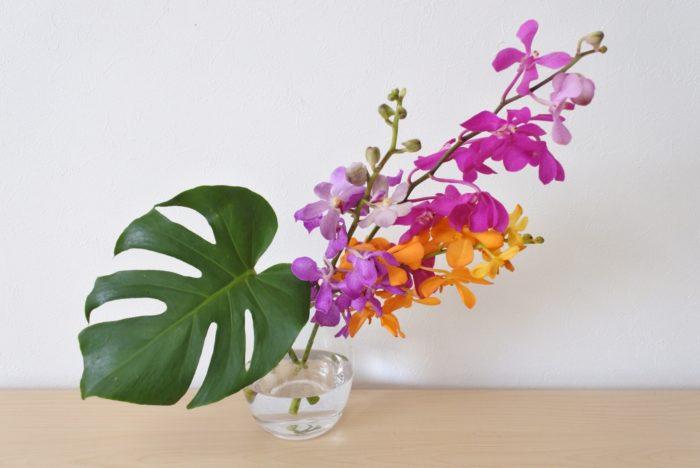 モカラは切花で売られている時には葉がついていないので、他の葉を一緒に生けるとバランスが取りやすいです。