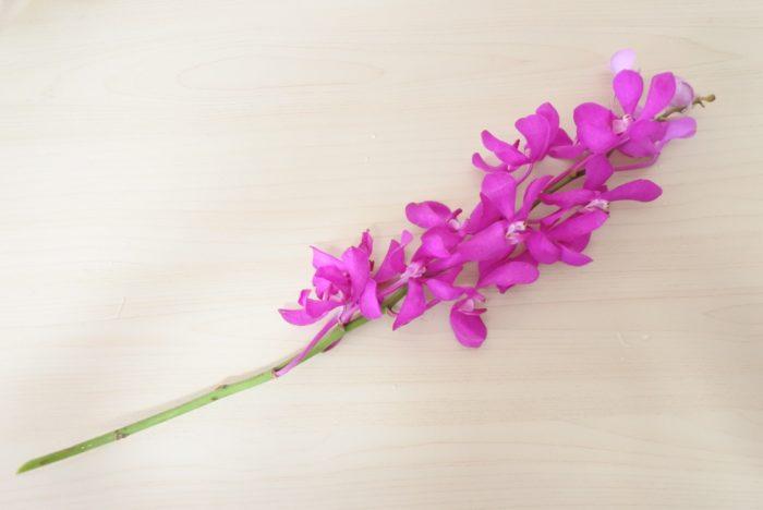 モカラなどのランの仲間は花が長く連なっていますが、途中でカットしても大丈夫です。大きい花瓶がないときや、いろいろな場所に飾りたい時は、途中で切り分けてみましょう。