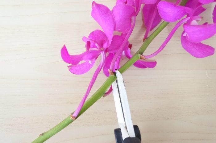 花のすぐ上でカットすると、本来の咲き方と同じく花がトップに来て自然に見えます。