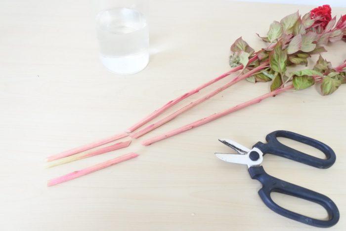 茎はどこを切っても大丈夫です。茎が柔らかく潰れやすいので鋭角ではなく、まっすぐよりはやや斜め程度に切ります。