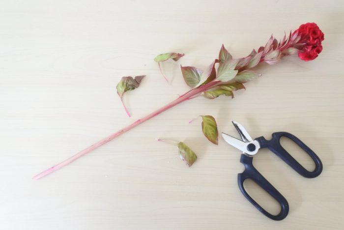 半分より下、または花瓶の中に入ってしまう部分の葉は取り除きましょう。