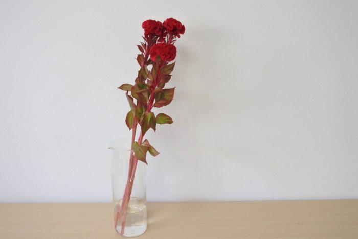 クルメケイトウなどは頭が重いため、重さや安定感のある花瓶に生けましょう。