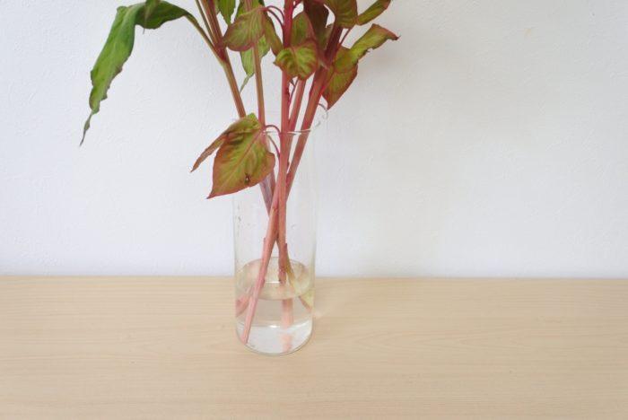 茎が腐りやすいので夏場は5センチ~茎が長くても10センチ程度の浅めの水に生けます。  ケイトウは頭が重いので、安定感、重さのある花瓶に生けましょう。