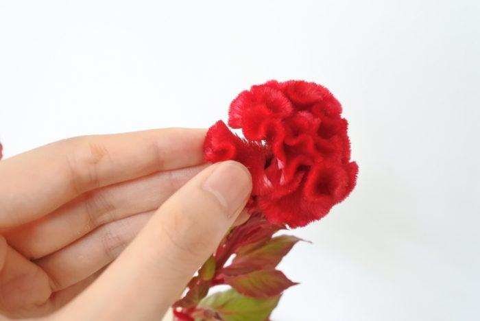 花序は1つの塊のように見えますが、実は何枚かに分かれています。