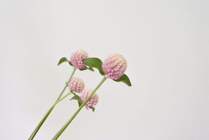 センニチコウ2…ニュアンスカラーのケイトウの横に添えるために淡い色の小花を加えました。