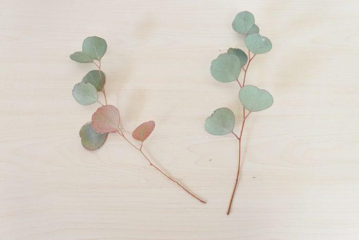ユーカリ…ポポラスという丸く大きい葉が特徴のユーカリです。全体的に葉が少ないので追加しました。