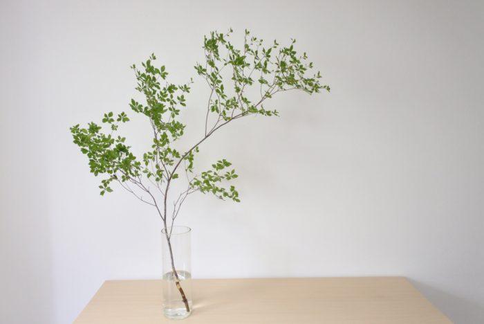 花にこだわらず、葉モノや枝モノを飾るのもおすすめです。