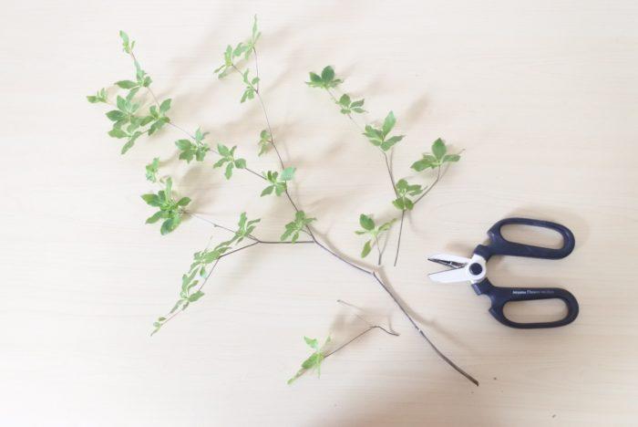 枝ごとにカットしても大丈夫ですよ。全体の長さの半分より下の枝や葉は落とした方が生けやすいです。花瓶の水につくと腐ってしまう原因になるので、その部分の葉もカットしましょう。
