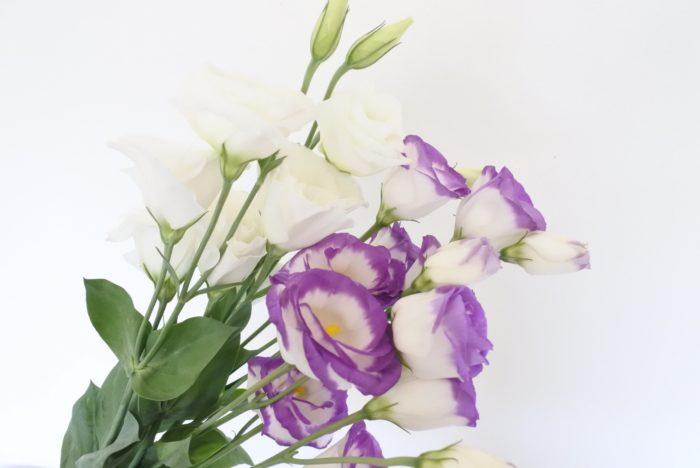 学名…Eustoma  別名…リシアンサス  科、属名…リンドウ科、ユーストマ属  分類…草花  原産地…アメリカのテキサス州  開花期…5月~7月、9月~10月  花色…紫、ピンク、白、緑、黄、茶、複色など  花言葉…「優美」「すがすがしい美しさ」  一般的にトルコキキョウという名で売られていますが、原産地がトルコではないのにも関わらず「トルコ」がつき、キキョウの仲間ではなくリンドウ科だということは意外と知られていません。名前の由来は蕾がトルコ人のターバンに似ているから、もともとの紫の花色がトルコ石の色だから、はたまた海の色から名づけられたなど様々な説があります。