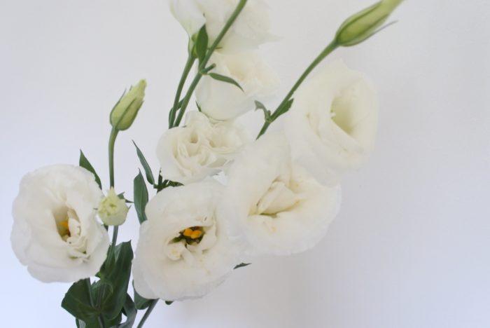 八重咲き  以前は一重のトルコキキョウが一般的でしたが、近年は八重咲きの方が多く出回るようになりました。品種により花弁の枚数や花の大きさが違います。