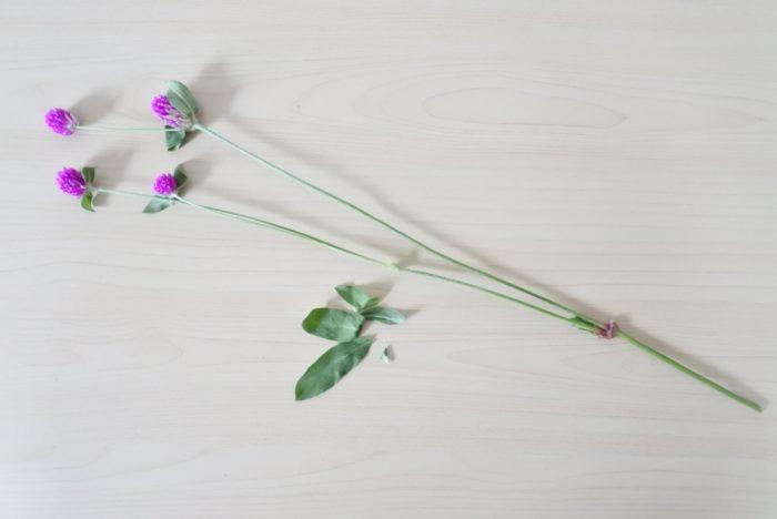千日紅(センニチコウ)は葉がついていたり枝分かれした部分は節のようになっています。その部分は避けてカットしましょう。花バサミかフラワーナイフで斜めにカットすると断面積が大きくなり、水の吸い上げが良くなります。