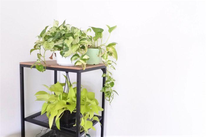 吊るす場所がない場合は棚から垂らす飾り方がおすすめです。写真のように違う色の葉を一緒に飾ってもいいですね。
