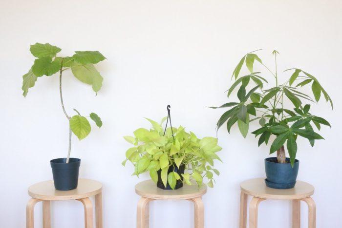 """1.置く場所の明るさで選ぶ  リビングと言っても日光が差し込むほど明るい場所から、あまり光が入らない場所まで明るさが様々ですよね。観葉植物によって必要な光の量が違うので、明るさに合わせた観葉植物を選びましょう。暗めの部屋には「耐陰性」という日陰でも耐える性質を持つ観葉植物を選びましょう。まったく光が入らない部屋では観葉植物は光合成をすることができず育ちませんが、暗めの部屋に置く場合でも1週間に1~2回明るい場所に置けば育つものもあります。  ▼耐陰性、耐寒性がある植物  <div class=""""posttype-post shortcode""""><div id=""""posts"""" class=""""default-posts""""><article><a href=""""https://lovegreen.net/plants/p62626/"""" class=""""clickable""""></a>     <div class=""""thumbnail"""" style=""""background-image:url(https://lovegreen.net/wp-content/uploads/2016/09/14466304_956354547806244_1640302433_o.jpg);"""">         <a href=""""https://lovegreen.net/plants/p62626/""""></a>   </div>   <div class=""""top-post-ttl-extext"""">     <h2><a href=""""https://lovegreen.net/plants/p62626/"""">蛍光灯の光で育ちやすい!日陰と寒さに強い植物7選。</a></h2>     <p><a href=""""https://lovegreen.net/plants/p62626/"""">太陽の光を気にしているとなかなか植物をインテリアとしても置けなくなってしまいますよね。お部屋の様々な場所で植…</a></p>     <p class=""""top-post-name"""">LOVEGREEN編集部</p>     <time class=""""top-post-date"""" datetime=""""2017-08-13"""">2017.08.13</time>     <span class=""""post-cat""""><a href=""""https://lovegreen.net/plants/"""">観葉植物</a></span>  </div> </article></div></div>    2.置き場所の広さや高さに合わせて選ぶ  リビングのシンボルツリーになるような大きいものや部屋のコーナーに置くもの、また棚の上に置く小さめのもの、吊るすことができる軽いものなど、置き場所に合ったものを探してみましょう。  3.リビングのテイストに合わせて選ぶ  和風、北欧風、男前テイスト、アジアンテイストなど、リビングのイメージに合うものを選んでみましょう。  <div class=""""posttype-post shortcode""""><div id=""""posts"""" class=""""default-posts""""><article><a href=""""https://lovegreen.net/lifestyle-interior/p138428/"""" class=""""clickable""""></a>     <div class=""""thumbnail"""" style=""""background-image:url(https://lovegreen.net/wp-content/uploads/2018/02/scandinavian-interior043-e1518664167733.jpg);"""">         <a href=""""https://lovegreen.net/lifestyle-interior/p138428/""""></a>   </div>   <div class=""""top-post-ttl-extext"""">     <h2><a href=""""https://lovegreen.net/lifestyle-interior/p138428/"""">北欧インテリアをうまく取り入れるポイントとコーディネート実例集</a></h2>     <p><a href=""""https://lovegreen.net/lifestyle-interior/p138428/"""">目次 ■北欧インテリアの歴史と特徴 ■北欧インテリアに仕上げるためのポイント ■北欧インテリアの実例集 ■北…</a></p>     <p class=""""top-post-name"""">三原広美</p>     <time cla"""