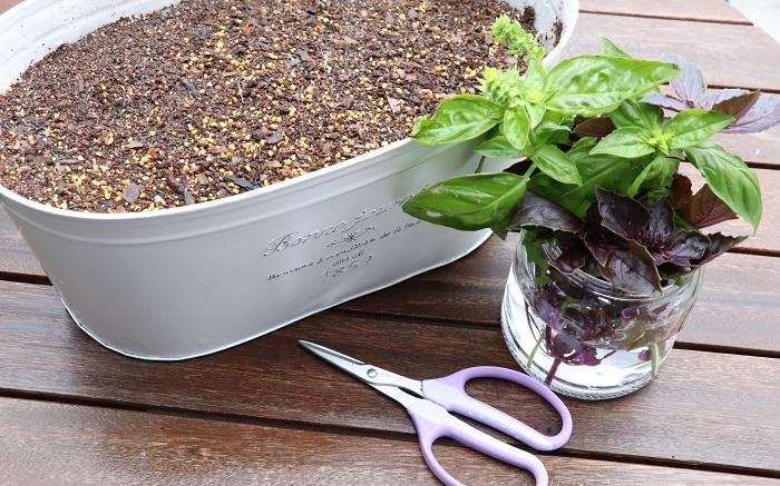 鉢、用土、切り戻ししたバジルの茎を水にさしておいたもの、ハサミ、割り箸などを用意します。