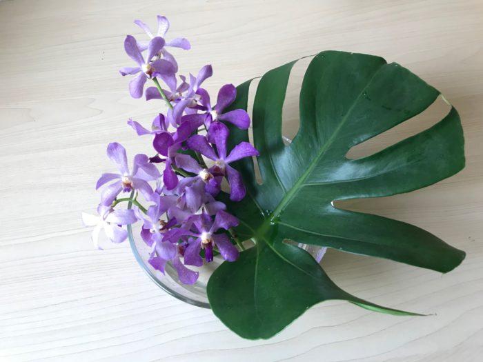モカラ×モンステラ モカラは花の色も多く、花の形は花びらが5枚に分かれて丸みを帯びて可愛らしい事から最近人気の蘭です。  花持ちも良く、今回はモンステラという夏に良く似合うグリーンに合わせて飾ってみました。  1.平らなガラスのボウルやお皿に浅く水を入れます。  2.モンステラの茎を短くカットして低く生けます。  3.蘭をいける。モンステラは大きな葉が奇抜に割けた様な形をしていて、浅い器に生ける際には、花止めとして裂けめを利用して花を固定することが出来ます。葉の根元から葉の先まで、裂けた様な形をしていますが、葉の根元に近い部分に花を合わせるとバランスが取りやすく見た目にも安定感があります。