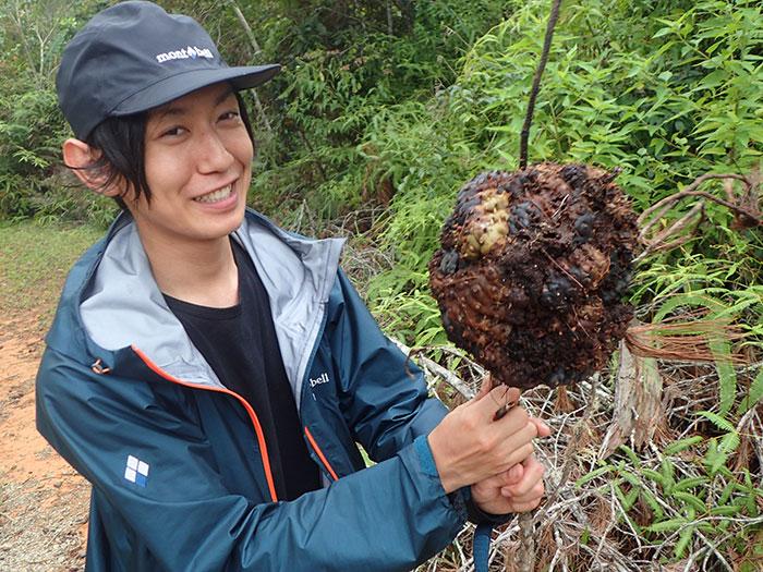 伐採された木に着いていたアリノスシダの塊根