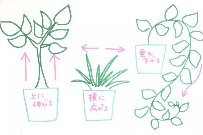 上に伸びるもの、ように横に広がるように育つもの、垂れ下がるものなど、成長する特徴が違うものを選ぶと高低差を出すことができ、バランスよく寄せ植えしやすいです。  寄せ植えは何種類でも問題ありませんが、初めのうちは3種類用意して三角形に並べるとバランスが取りやすくおすすめです。