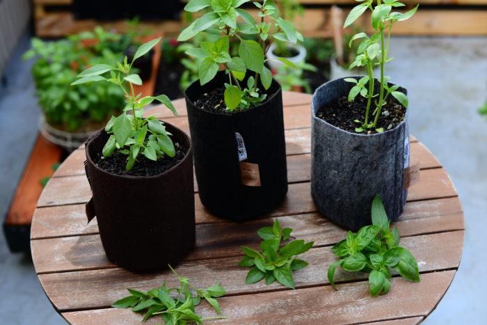 わき芽や葉が生育したら葉が込み合わないように順次収穫していきましょう。  グングン生育してくるとまとめて収穫してバジルペーストなどを作るのも良いですね。  すぐに使わないときは、バジルを乾燥させると長い間保存できます。
