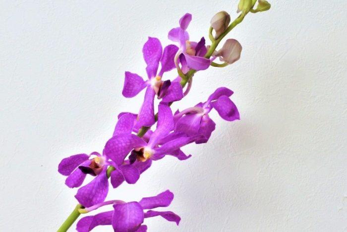 """花色…白、ピンク、紫、黄など  格調高いイメージがあるランの花は、敬老の日のプレゼントにピッタリですね。「ラン」と言っても、コチョウラン、デンファレ、シンビジウムなどさまざまな種類があり、色や形も豊富です。  ▼いろいろな種類のラン  <div class=""""posttype-post shortcode""""><div id=""""posts"""" class=""""default-posts""""><article><a href=""""https://lovegreen.net/lifestyle-interior/p176903/"""" class=""""clickable""""></a>     <div class=""""thumbnail"""" style=""""background-image:url(https://lovegreen.net/wp-content/uploads/2018/07/IMG_7895-e1530777274867.jpg);"""">         <a href=""""https://lovegreen.net/lifestyle-interior/p176903/""""></a>   </div>   <div class=""""top-post-ttl-extext"""">     <h2><a href=""""https://lovegreen.net/lifestyle-interior/p176903/"""">夏でも長持ち!タイプの違う蘭×グリーンの簡単な飾り方</a></h2>     <p><a href=""""https://lovegreen.net/lifestyle-interior/p176903/"""">夏の暑さを迎えると、せっかく生けたお花がすぐに萎れてしまい、つい花を飾るのを控えてしまう事はありませんか? …</a></p>     <p class=""""top-post-name"""">峰亜由美</p>     <time class=""""top-post-date"""" datetime=""""2018-07-09"""">2018.07.09</time>     <span class=""""post-cat""""><a href=""""https://lovegreen.net/lifestyle-interior/"""">暮らし・インテリア</a></span>  </div> </article></div></div>"""