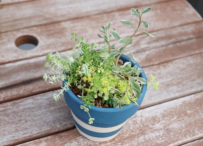 ペイントしたテラコッタ鉢に植えると、それだけで全く違う雰囲気を楽しめます。