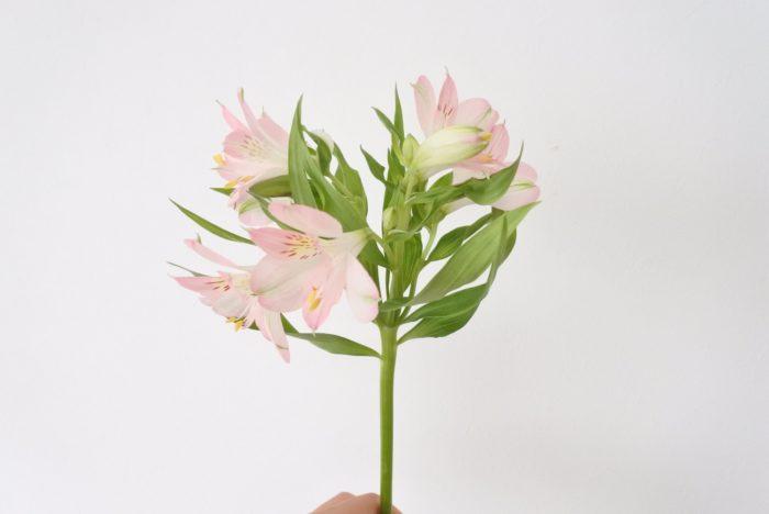 先で分かれている花、スプレー咲きの小花など  写真のアルストロメリアのように、先で分かれているものや小花は、花と花の間にガーベラを入れ込むようにしたり、小花の上にガーベラを重ねるように花を組んでいくと作りやすいです。